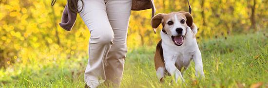 Dog Walking Dogbuddy